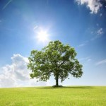 Was tun, wenn der Baum des Nachbars stört?