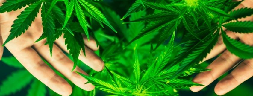 Gras Drogen Rauschgifthandel
