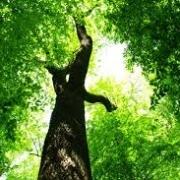 Grüner Baum von unten