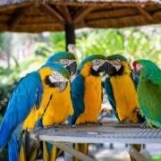 Tierhaltung in reinem Wohngebiet